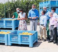 """Sus Majestades los Reyes en la zona de recolección de melocotones en la Cooperativa de frutas """"La Carrichosa"""""""