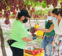 Doña Letizia junto a unas trabajadoras que estan recolectando uvas