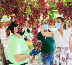 Doña Letizia conversa con una trabajadora que esta vendimiando